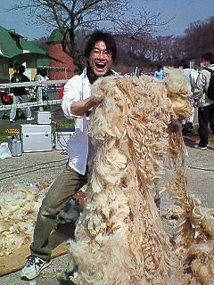 うぉっ!すげぇ!羊の毛!!!!