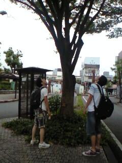 夏の静岡。