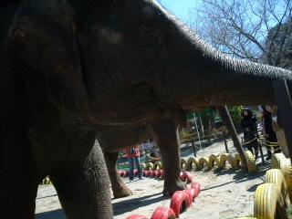 象とバイバイ