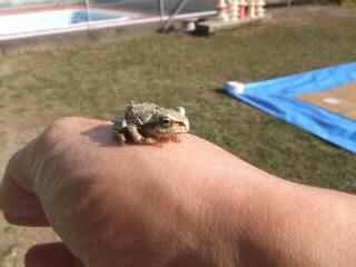 あした、カエル。