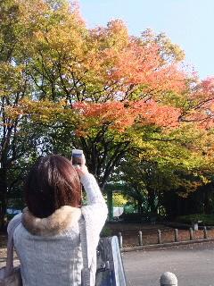 宮城県と紅葉