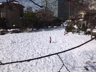 雪の日が多いねぇ。