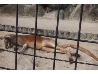 博多南幼稚園&動物園